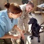 vet_check